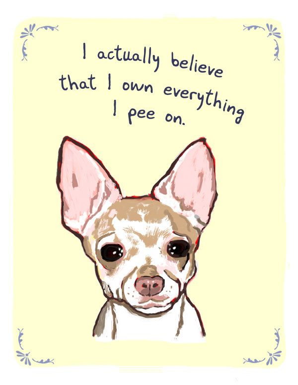 Chihuahua 5x7 Print of Original Painting with phrase