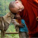 La vida es un ciclo interminable de aprendizaje y hoy queremos brindarles las leyes o consejos que nos ha dado este monje para nuestro bienestar.No es secreto para nadie que los monjes son personas de suma sabiduria que dedican su vida al bienestar, la paz y la armonía de terceros.Ellos ...
