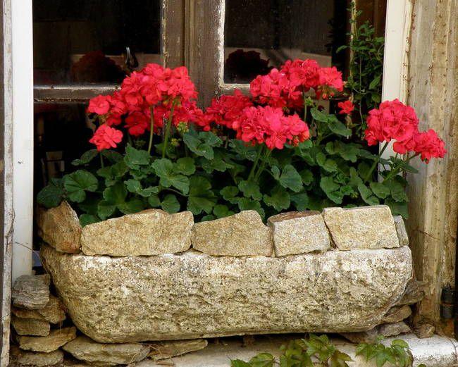 Les 683 meilleures images du tableau geranium sur pinterest les fenetres fen tres et portes - Quand planter les geraniums ...