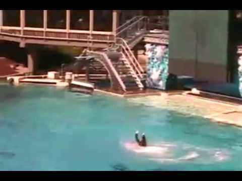 Killer Whale Attacks at Sea World! UNCUT VIDEO!!!!! - YouTube