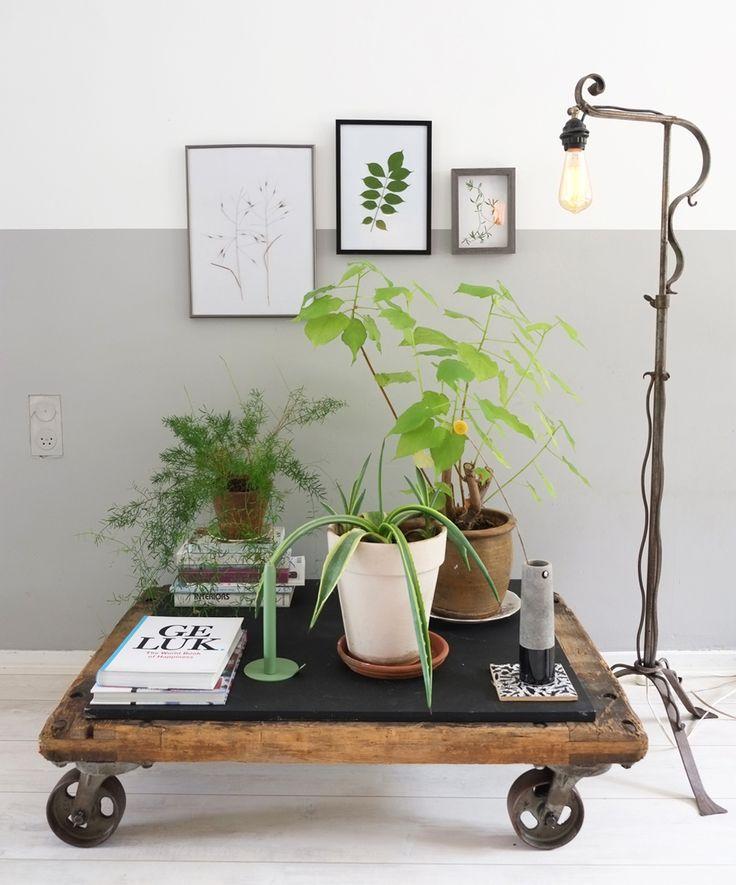 Planten brengen veel sfeer in huis. Ik ben er dol op! Kan vaak geen nee zeggen wanneer ik weer een leuk exemplaar ontdek en heb een nieuwe hobby... het stekken van plantjes.