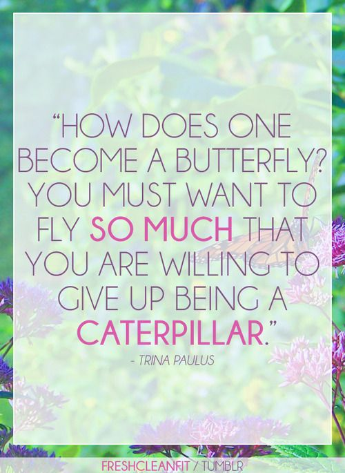 Never give up! Learn from the butterfly. #quote