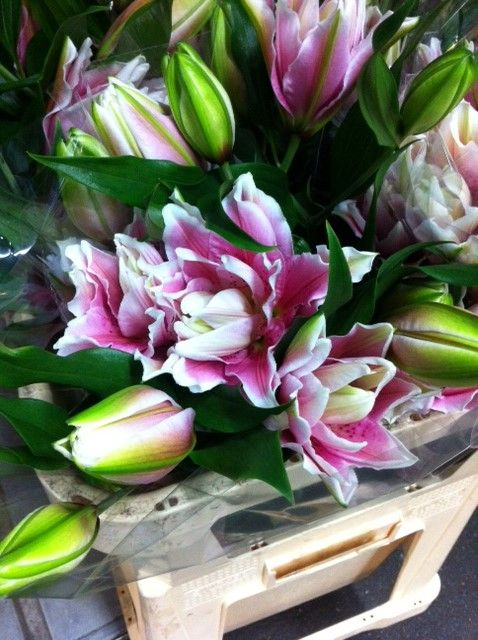 #Lily #Roselily #Natalia; Available at www.barendsen.nl