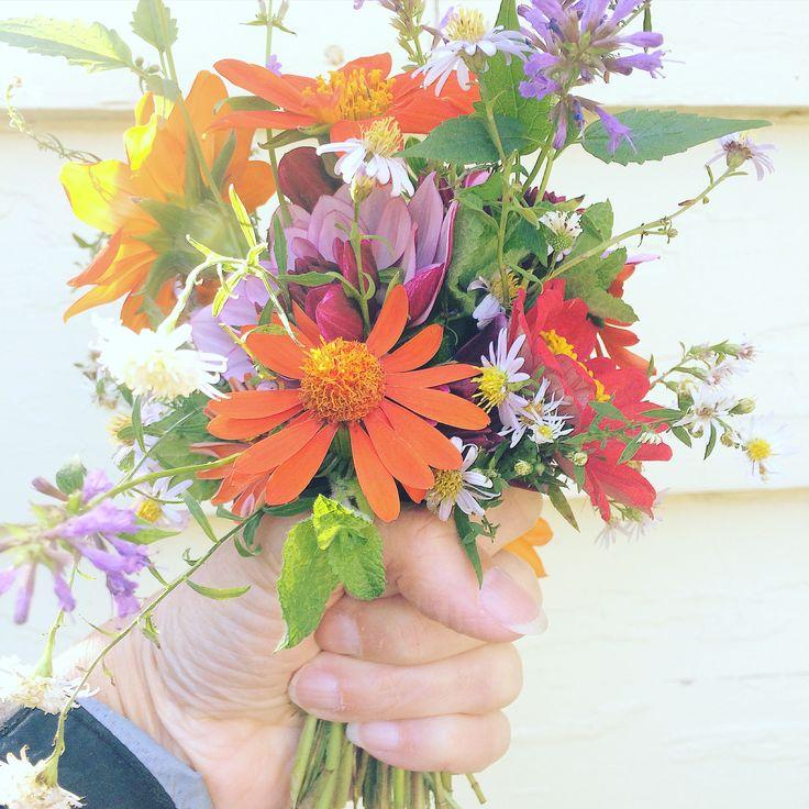 Yard flowers.