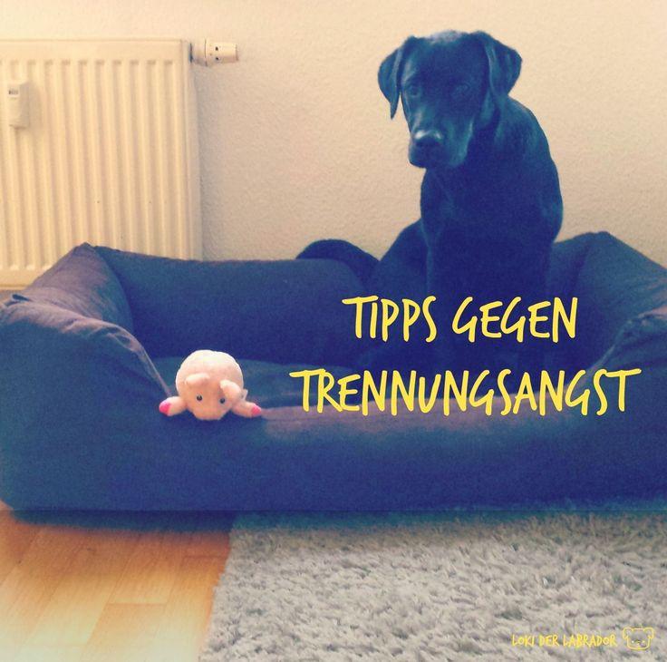 Tipps für einen stressfreien  Alltag mit Hund ♥