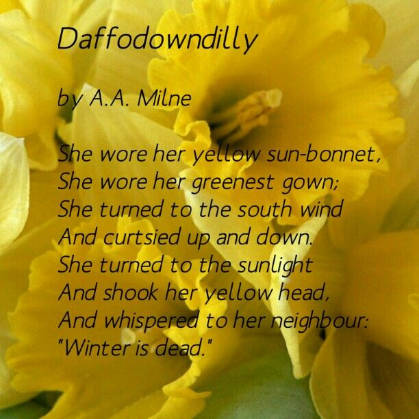 Spring Flower Poems Quotes: Daffodil Spring Poem Daffodowndilly By A.A.Milne