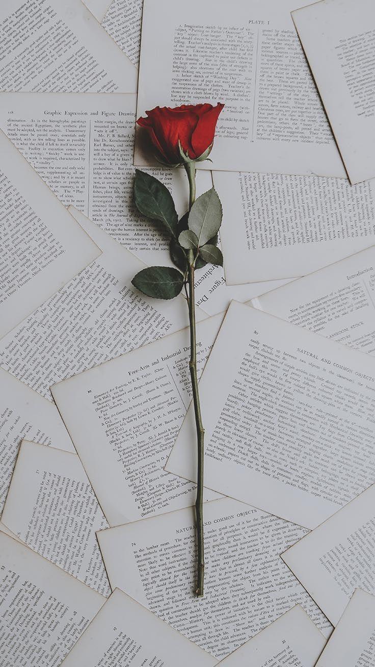 Buy Amazon Amzn To 31edjmn Ein Dutzend Rote Rosen Iphone Wallpapers Fr Valentine Blogueuse Do Blumen Hintergrund Iphone Rosentapete Hintergrund Iphone