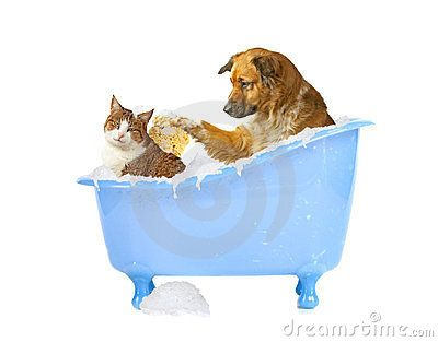 Cat-wash - Download From Over 30 Million High Quality Stock Photos, Images, Vectors. Sign up for FREE today. Image: 23775237