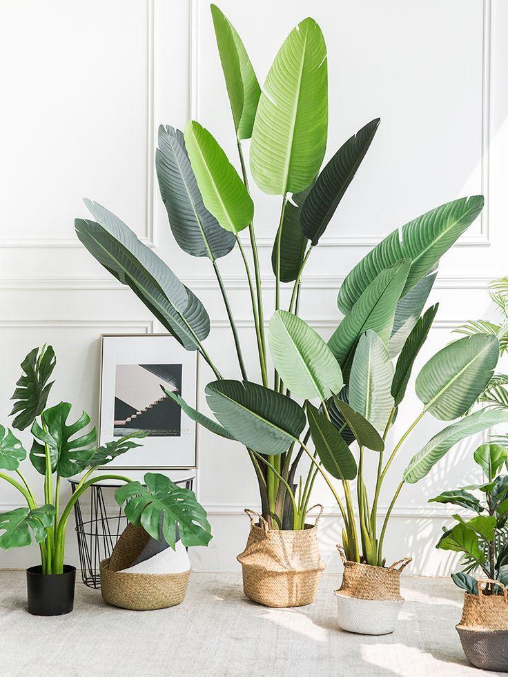 植物 上的釘圖
