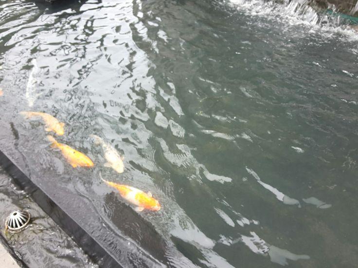 Ikan bergerak, air mengalir.