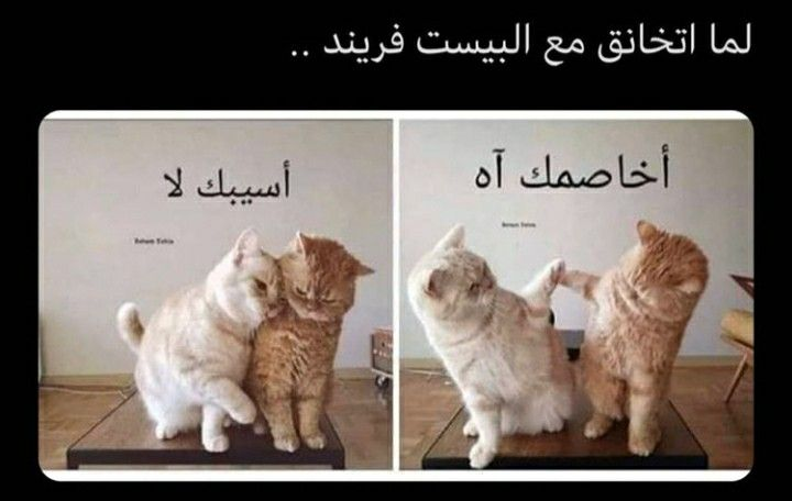 Pin By Syeℓma ۦ On كلام أعجبني Animals Dogs