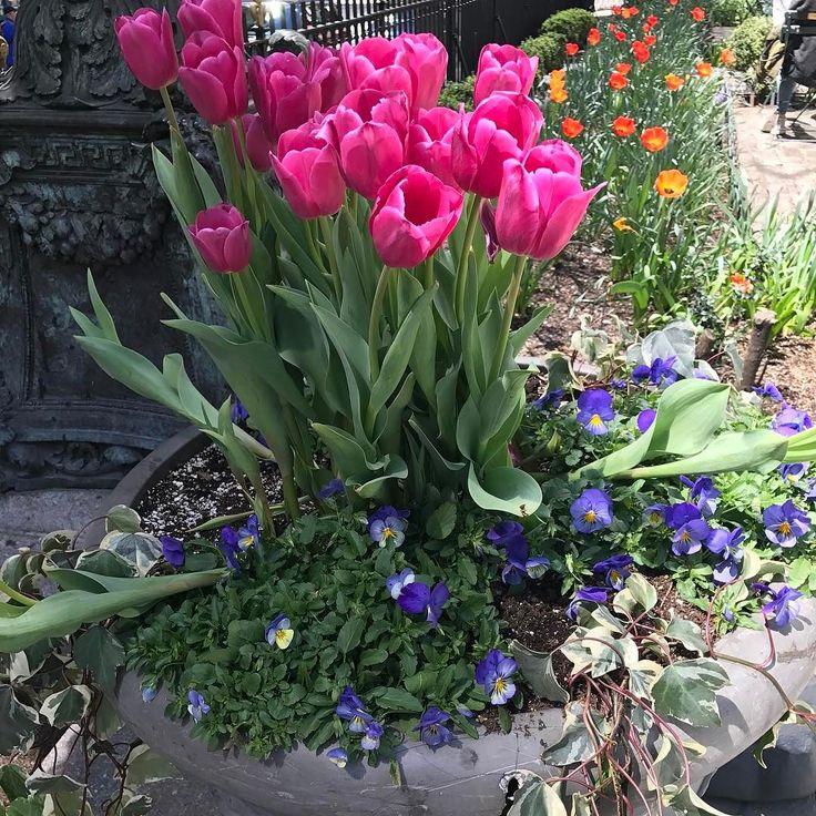 Asias largest tulip garden in full bloom - Rediff.com