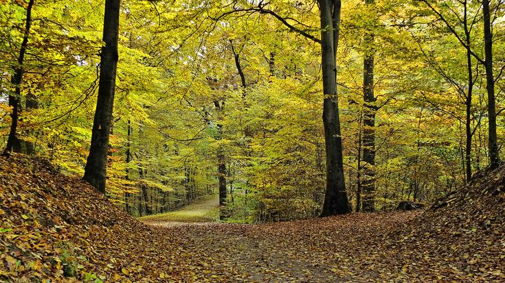 Pflegerin Mosen Wald Partnertausch
