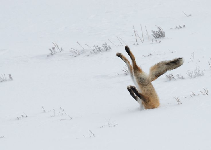 2016 Winners :: Comedy Wildlife Photography Awards - Conservation through Competition