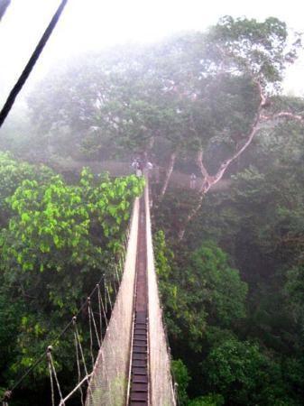 bridge over the rainforest in iquitos peru; talk about exhilarating!