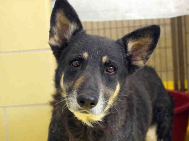 Petharbor Com Animal Shelter Adopt A Pet Dogs Cats Puppies Kittens Humane Society Spca Lost Found Animal Shelter Animals Dogs