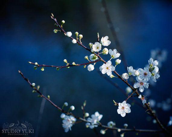Bloem fotografie magische donker blauw Cherry door StudioYuki