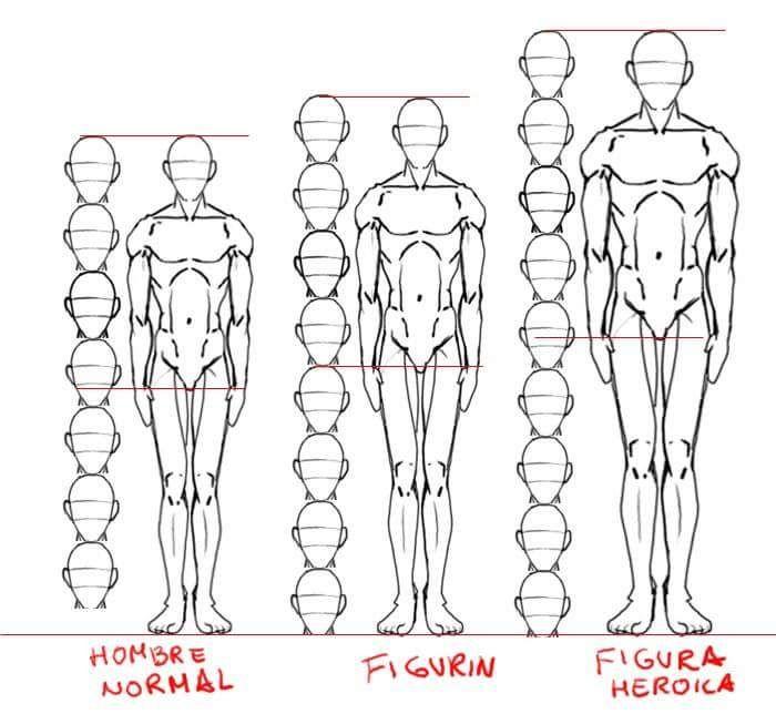Mejores 93 imágenes de Anatomy en Pinterest | Anatomía humana ...