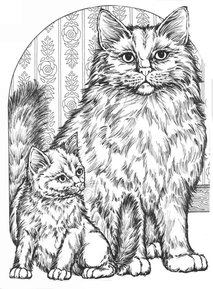 coloring pages cats coloring for adults kleuren voor volwassenen - Coloring Pages Cats Kittens