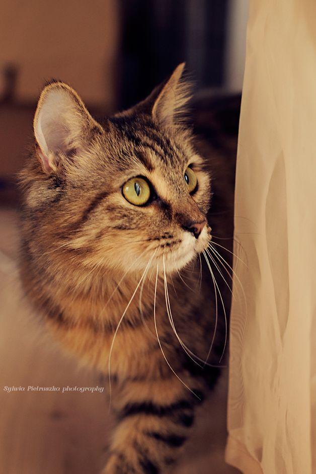 Cat photo.