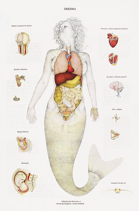 Anatomical Drawings of Mermaids, Nymphs and Monster