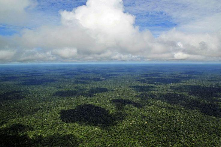 Em comemoração ao Dia da Amazônia, o WWF-Brasil lança o site Somos Amazônia com fotos, vídeos e um mapa interativo traçando as principais ameaças sofridas pelo bioma. Foto: Neil Palmer/Wikipedia.
