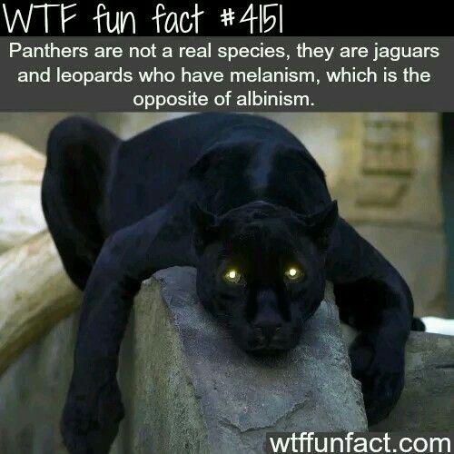 #Randomfacts #facts #wtffunfacts