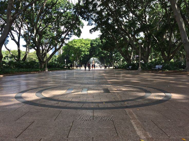 Hyde Park, in Sydney, is Australia's oldest park. The park contains around 580 mature exotic and native trees including the historic central avenue of Hill's Figs which line the central pedestrian avenue running from Macquarie Street to the ANZAC Memorial. /Cong Nguyen Photography November 2014.