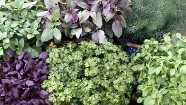 Jak pěstovat bylinky v nádobách? Je čas sít a sázet zelené koření
