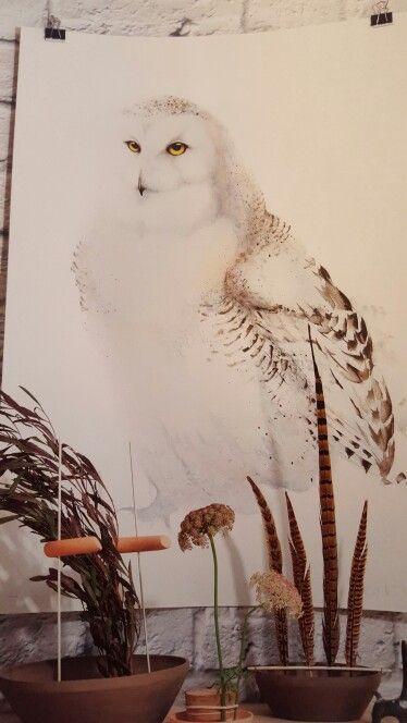 Owl uggla fjälluggla Karl Mårtens