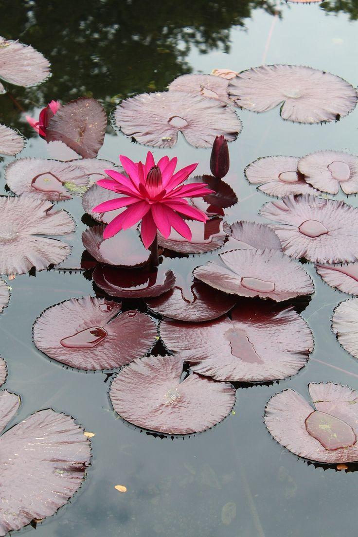 Meditating beauty lily love