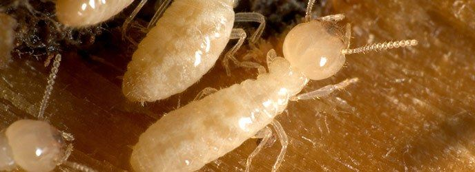 Termite Treatment and Control PA – NJ #termite #treatment #nj http://vps.nef2.com/termite-treatment-and-control-pa-nj-termite-treatment-nj/  # Termite Treatment Services Don t Let Termites Destroy Your Home! Each year, these voracious insects cause over $7 billion worth of structural damage throughout the United States. Through a crack as little as 1/64th of an inch, termites can invade your home, establish a thriving nest, and do extensive damage sight unseen, resulting in thousands of…
