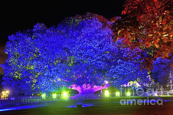 Long exposure night photograph of a bright and colorful garden of light at the Royal Botanical Gardens in Sydney during the Vivid Sydney Festival 2017. Garden of Light by Kaye Menner Photography Quality Prints Cards Products at: https://kaye-menner.pixels.com/featured/garden-of-light-by-kaye-menner-kaye-menner.html