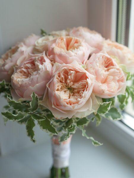 Floristics