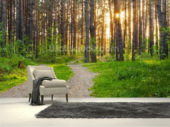 Forest Sunset wall mural room setting