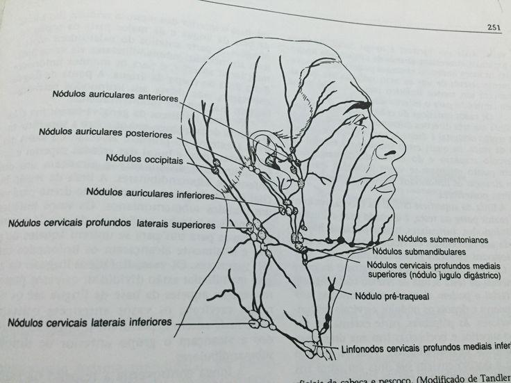Linfonodos de cabeça e pescoço