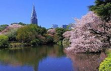 Shinjuku Gyoen. Cherry Blossom views, done. Spring, 2015.
