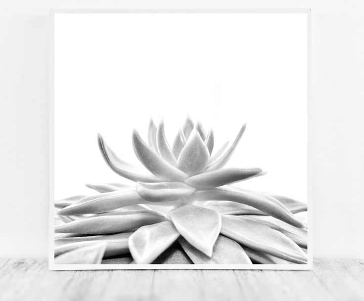 Beautiful Black and White Succulent Print to Update or Decorate your Office or Home Decor   This offer is for the digital files, not a print. Print instantly at home, take the file to your local printer or photo printing shop, or upload online to a printing service.   After checkout you will be dir