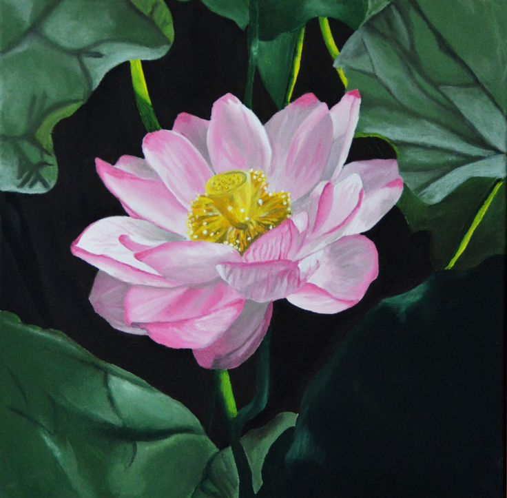 """Nelumbo Nucifera"" acrylics on canvas by Francesca Manuguerra"