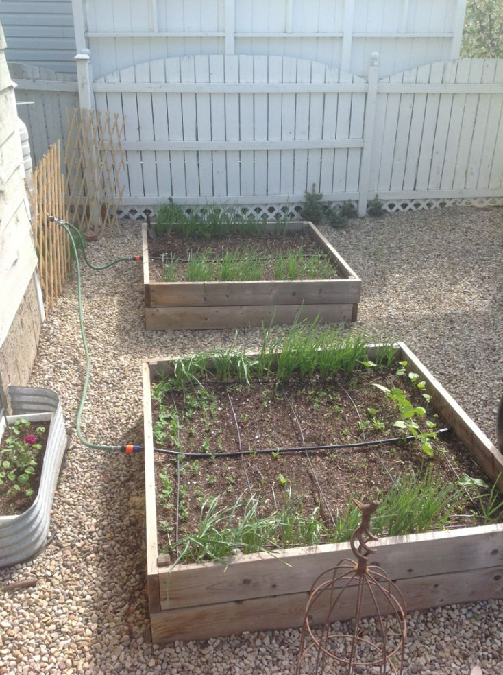 160 Best Drip Irrigation Images On Pinterest Drip Irrigation Vegetable Garden And Raised Beds