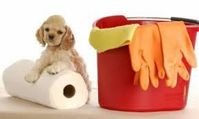 Algumas dicas de como reduzir o mauodor de xixi de animal doméstico.    Para limpar, desinfetar e remover os odores deixados pela urina de animais domésticos no carro, piso, tapetes,