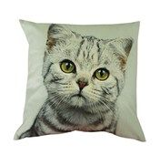Tabby Velvet Look Cushion  Website Coming soon...