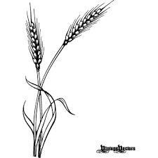 Image result for espigas de trigo