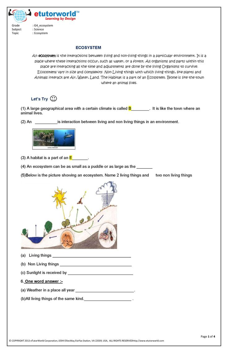 4th Grade Science Worksheets PDF   Science worksheets, 4th ...