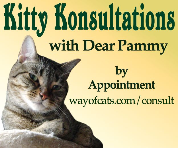 Kitty Konsultations with Dear Pammy  Cat Discipline
