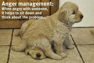 Anger Management: Problems Solving, Animal Humor, Cute Quotes, Motivation Mondays, So Funny, Anger Management, Quotes About Life, Good Advice, Golden Retriever