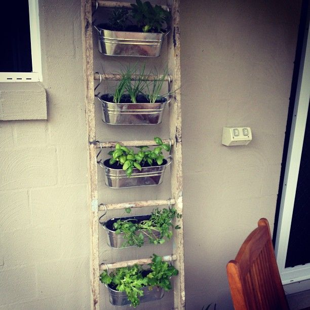 Vertical Herb Garden Archives - Page 11 of 11 - Herb Gardening Today