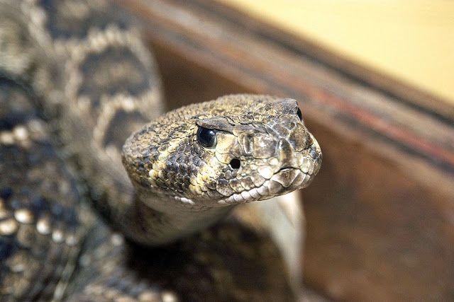 Πιερία: Γιατί γέμισε φίδια η Λάρισα