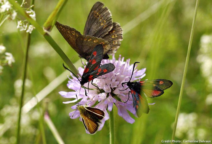 43 best images about insectes du jardin on pinterest - Reconnaitre les insectes xylophages ...