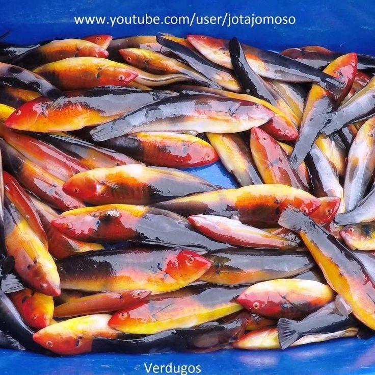 Fishing videos / videos de pesca  #bassfishing  #fisheries  #fishingshop  #fishingtackleshop  #fishinghook  #lure  #reel  #fishingstore  #go fishing  #walleyefishing  #huntingandfishing  #bait  #tackle  #angler  #saltwater  #baitandtackle  #fising  #carpfish  #shimanofishing  #deepseafishing  #jig  #fishingknots  #livebait